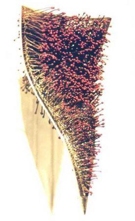 Patricia lemaire - Le temps des cerises- 1200 queues de cerises !